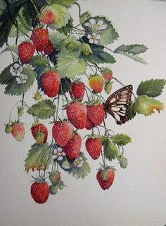 /  #89 - -1 - Fyyfvbwrtdbx1957 Fruit art Fruit-art Creative food Chocolate art Fruit platters Fruit trays Bento Fruit arrangements Watermelon Edible arrangements Fruit cakes Edible art Fruit Gardening Recipes Cooking tips Yummy cakes Health desserts Cheesecake Veggie food Vegans Fruit Illustration, Watercolor Illustration, Vintage Prints, Vintage Art, Watercolor And Ink, Watercolor Paintings, Strawberry Pictures, Fruit Painting, Fruit Art