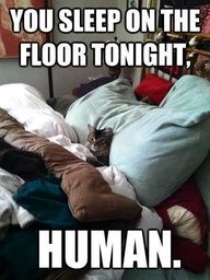 You sleep on the floor tonight