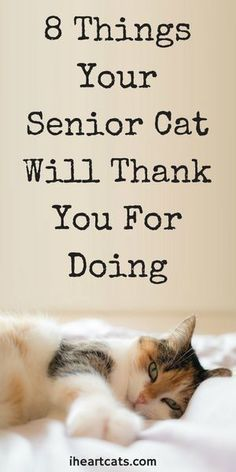 8 Things Your Senior Cat Will Thank You For Doing Kitty will thank you for this! Make sure to take care of your senior cat. They have a lot of love to give! I Heart Cats – senior kitty Cat Care Tips, Pet Care, Pet Tips, Baby Tips, Cat Ages, Son Chat, Cat Info, Kitten Care, Cat Behavior