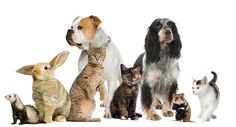 ardmore_animal_hospital_pets_dogs_cats_rabbits_rodents.jpg