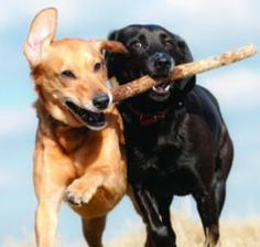 Getting a second dog? How can you make sure they'll get along