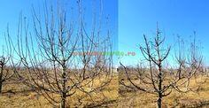 Măr adult cu creșteri exuberante în anul precedent Fruit Trees, Grape Vines, Paradis, Anul Nou, Gardening, Parma, Mai, Urban, Lush