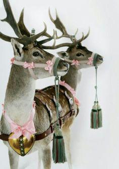 Bizar mss, maar ik houd van 'kunst' met geprepareerde dieren.