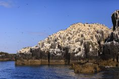 One of the Farne Islands off the coast of Northumberland.