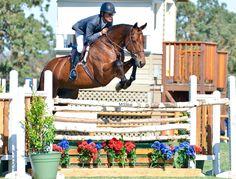 John French Paso Robles Horse Park 2016. Photo by Wendy Gleason\Malibu5starnaturals.com