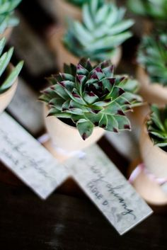 mini succulents as favours....I only post this casue if you like it, I have a hook-up for REAL cheap.