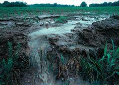 Fertilizer - Wikipedia, the free encyclopedia