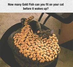 Funny Animal Pictures - View our collection of cute and funny pet videos and pics. New funny animal pictures and videos submitted daily. Cute Funny Animals, Funny Cute, Humorous Animals, Crazy Cat Lady, Crazy Cats, Cat Memes, Funny Memes, Funny Humour, Funny Captions