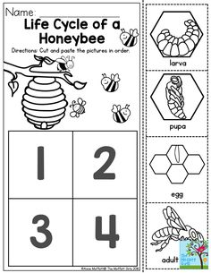 FREE bee life cycle worksheets english+spanish | MY TPT store ...