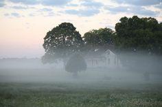 Morning fog at Harlindale Farm Park in Franklin, TN
