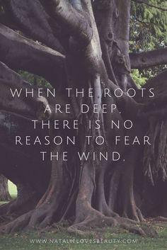Motivational Quotes : QUOTATION - Image : Quotes about Motivation - Description 35 Powerful Inspirational Quotes. Sharing is Caring - Hey can you Share this Quote Great Quotes, Quotes To Live By, Me Quotes, Inspirational Quotes, Roots Quotes, Quotes About Roots, No Fear Quotes, Great Sayings, Quotes About Growing