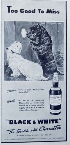 Black and White Scotch Whiskey  40 s Print ad  Scarce old ad   two dogs looking thru hole in fence