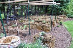 Straw Bale Gardening Mushrooms in your bale