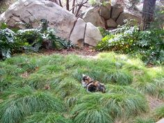 The Feral Cats of Disneyland | VICE | United States
