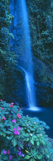 rainforest waterfall (alajuela with wild busy impatiens) Central Valley, Costa Rica | David Noton Photography