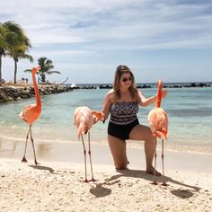 🌟 Dreams come true 🌟 Flamingo Beach Aruba, Dreams Come True, Wanderlust, Animals, Instagram, Fluffy Animals, Amor, Creative Photography, Creativity