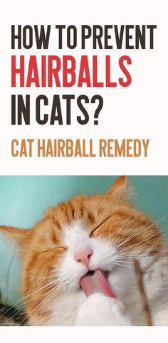 Cat Grooming Tips Coconut Oil Cats, Can Cats Eat Ham, Cat Health Care, Sick Cat, Dead Hair, Cat Signs, Cat Care Tips, Cat Grooming, Health Facts