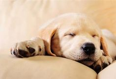 Decoding Your Dog's Sleeping Habits | petMD