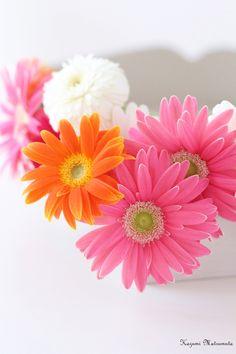Hello July, Potpourri, Sunny Days, Garden, Flowers, Plants, Bright, Happy, Garten