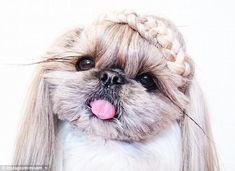Resultado de imagen para dogs hairstyles
