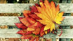 Autumn Wallpaper HD let you feel the magic of Fall Cover Pics For Facebook, Fb Cover Photos, Facebook Timeline Covers, Cover Picture, Facebook Photos, Timeline Photos, Autumn Leaves Wallpaper, Fall Wallpaper, Flower Wallpaper