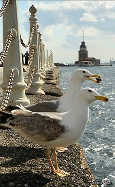 Maiden's Tower, Istanbul, Turkey – Rada – Join the world of pin Places Around The World, Around The Worlds, Beautiful Birds, Beautiful Places, Flora Und Fauna, Foto Poster, Turkey Photos, Pamukkale, All Nature