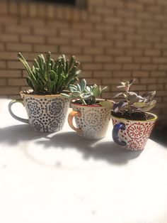 I planted succulents in tea cups today!