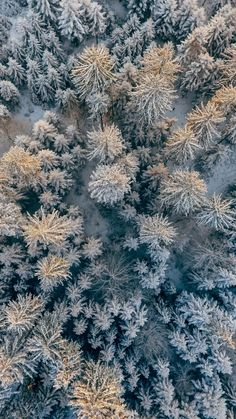New tree top view winter 19 Ideas View Wallpaper, Winter Wallpaper, Outside Fall Decorations, Trees Top View, Tree Photography, London Photography, Landscape Photography, Forest Illustration, Bird Tree