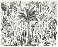 Tropical Plants Engraving royalty-free stock illustration