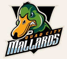 quad city mallards - Google Search