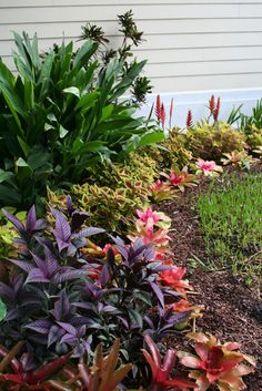 I might be biased, but what better plants for a summer garden than tropicals? Tropical plants happen to thrive on the very same heat and hum...