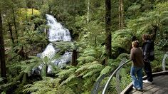 Triplet Falls Rainforest Walk, Great Ocean Road, Victoria, Australia