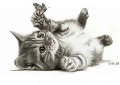 """""""Cat and Butterfly"""" pencil drawing"""