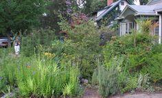 Takoma Park garden of Master Gardener Wendy Bell.