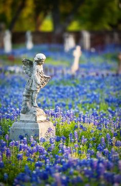 More from St. Mary's Catholic Cemetery, Fredericksburg, TX