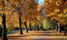 Bute Park - Cardiff
