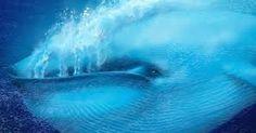 Si deseas jugar el juego de la ballena azul , debes darle un clic aqui http://libertadlimites.blogspot.pe/2017/05/que-es-la-ballena-azul.html