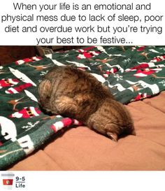 Animals Can Express Our Current Mood In The Most Accurate Way - World's largest collection of cat memes and other animals Funny Animal Memes, Dog Memes, Cute Funny Animals, Funny Animal Pictures, Cute Cats, Funny Cats, Funny Memes, Sarcastic Memes, Hilarious