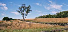 Brandywine Creek State Park - Wilmington, Delaware =  Tulip Tree Woods nature preserve, Freshwater Marsh nature preserve, hiking, fishing, picnic, kite flying, disc golf, sledding, cross-country skiing, canoe, tubing, nature center, nature programs, gift shop, primitive youth group camping, geocaching, biking