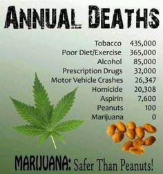 33 best marijuana is safer than alcohol images on pinterest