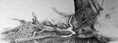 """Danmarks gamle egetræer er vores fælles kulturarv.Udgangspunktet for """"Egeekspeditioner"""" er en række ekspeditioner foretaget af de to kunstnere; billedkunstner Ole Lejbach og forfatter Jens Blendstrup. De sidste par år har de gennemtravet hele landet på jagtefter egetræer med en historie at fortælle. Det er blevet til ca. 70 meget store blyantstegninger med tilhørende nye tekster..."""