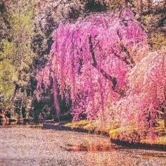 """I want to do with you what spring does with the cherry trees.""  Pablo Neruda   Happy first day of Spring!   Springtime, Brooklyn Botanic Garden, New York City (at Japanese Hill And Pond Garden- Brooklyn Botanical Gardens)"