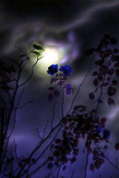 Mystical shades of purple