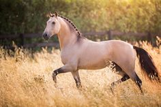 Plaited manes are just so pretty! All The Pretty Horses, Beautiful Horses, Animals Beautiful, Cute Animals, Cute Horses, Horse Love, Horse Photos, Horse Pictures, Arte Equina