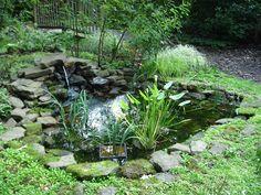 Woodland water garden  http://pijournal.blogspot.com/2008/11/woodland-water-garden.html