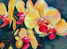 Yellow phalaenopsis  Ann Mortimer