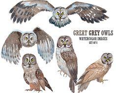 Great grey owl clipart Bird clipart Watercolor clipart