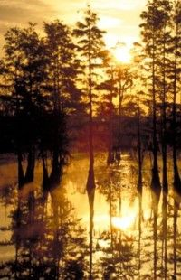 Sunrise in the Okefenokee Swamp