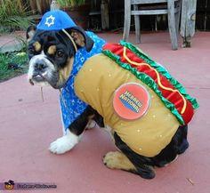 Odys the Kosher Dog! - 2012 Halloween Costume Contest