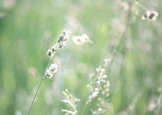 Orchard Grass in a Spring Sunset